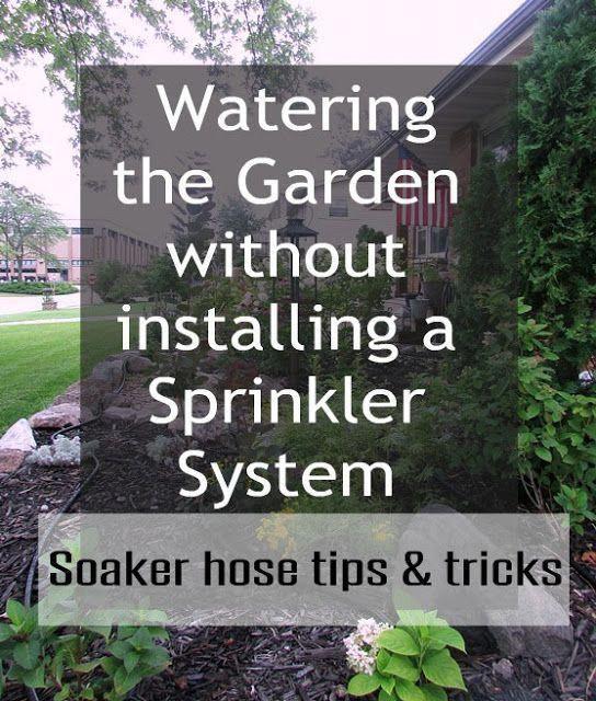 Urban Vegetable Gardening For Beginners: Watering Garden #GardeningTipsBlog