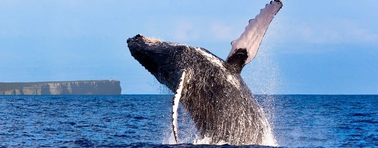 Jervis Bay Whale Watching