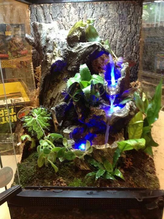 Zoo Med's new self-contained LED waterfall in a Naturalistic terrarium