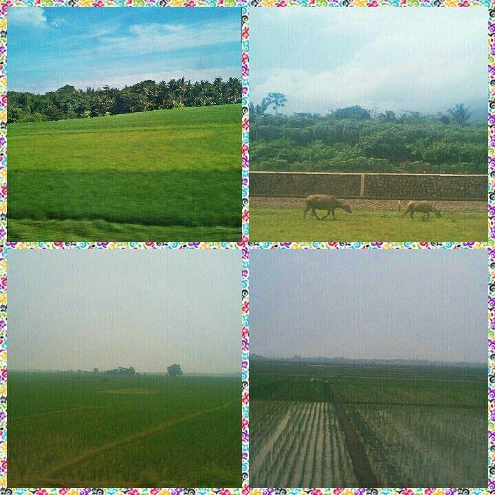 Priceless views ....  #latepost #yogyakarta #travel #trainride #paddyfields #sawah