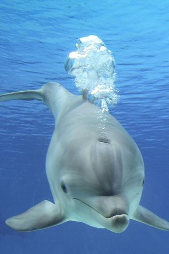 Golfinho grande.jpg                                                                                                                                                                                 Mais