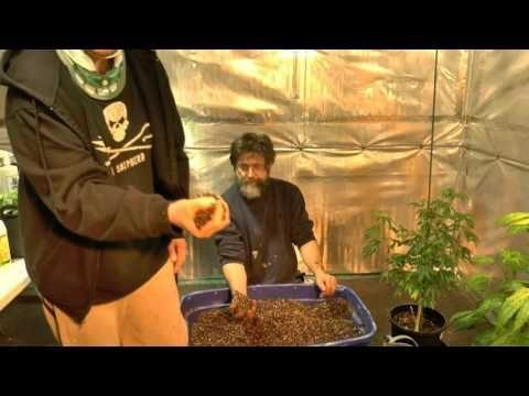 Rooting & Transplanting  Cannabis Next Step