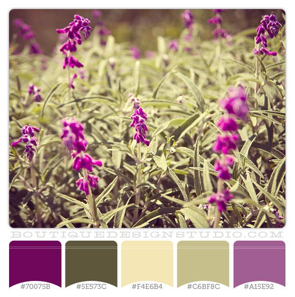Violet Fields - purple and green color scheme for our new living room? Add in some brown too!