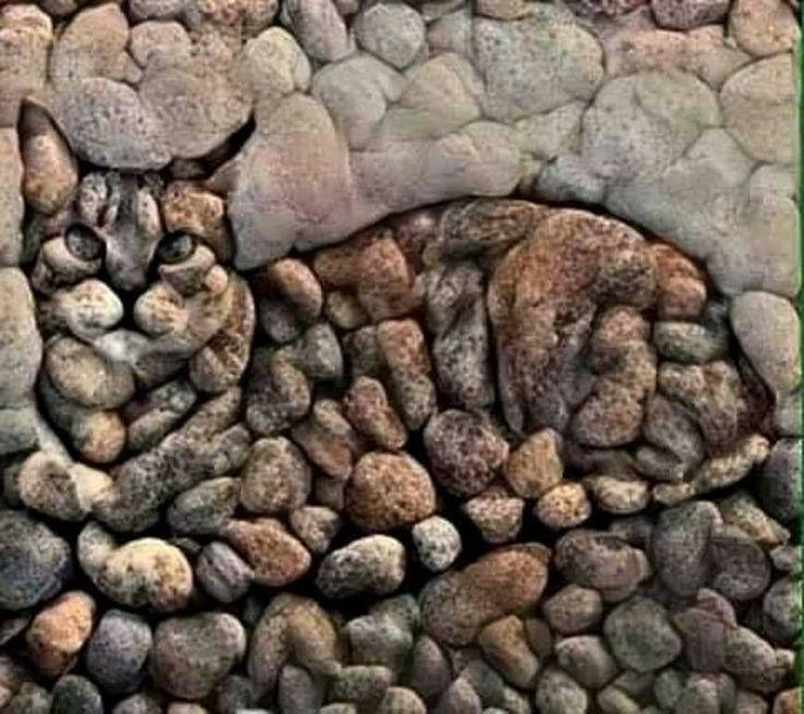 Purr Rock