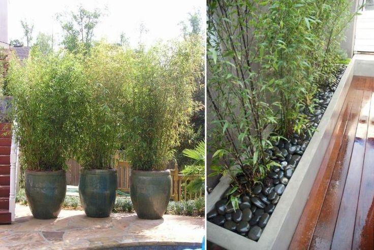 des bambous cultivés en pots et bacs sur la terrasse
