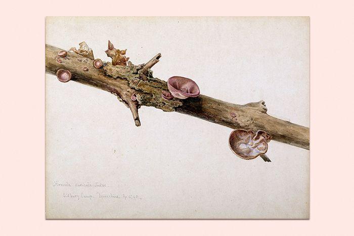 Находка T&P: акварельные рисунки грибов Беатрис Поттер — T&P