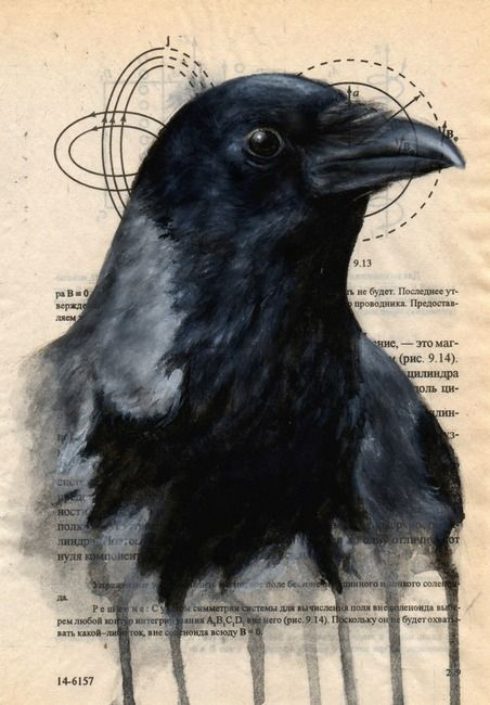 Hooded Crow. Amazing watercolors on an old book page.