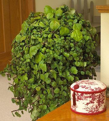 153 Best House Plants Images On Pinterest Lilies Orchid 640 x 480