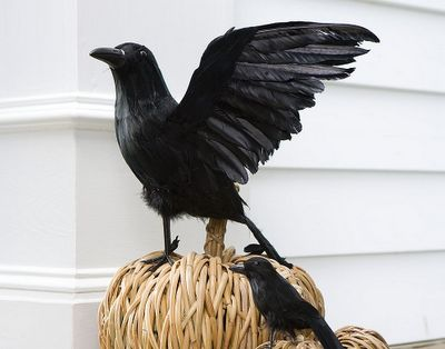 black crows i had to replace some of my crows this year but i use them to perch on my big planters on my porch its like they are standing guard over