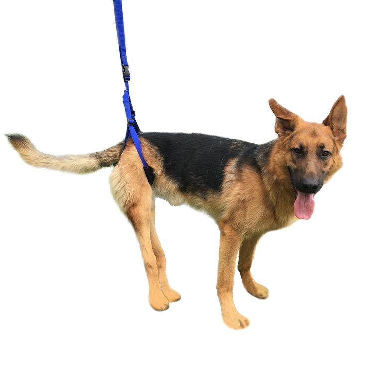Best Harness For Dogs With Degenerative Myelopathy