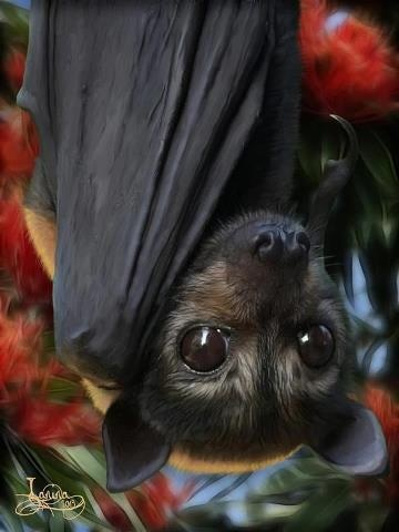 Um' this is a bat, bat's are very creepy but this a cute creepy bat:)