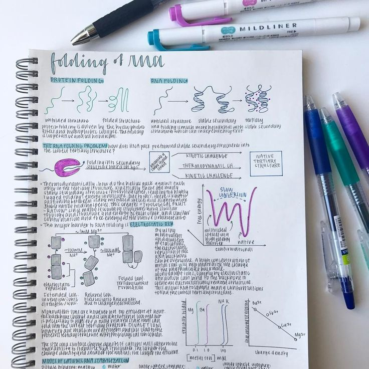 if you couldn't already tell, I really love the turquoise and purple midliners ✨ // proteins used to be thought of as the only functional and enzymatic macromolecules, but when rna self-splicing was discovered, research into rna folding exploded // rna folding is different from protein folding in that rna forms very stable and long lasting secondary structures. only with the help of cations, like magnesium and sodium, can rna secondary structures overcome the electrostatic repulsion…