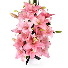 Cheery Delight - A sensational boxed arrangement bursting with vibrant pink Asiatic lilies and lush green foliage.