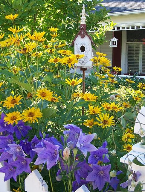 the 25 best wonderful flowers ideas on pinterest. Black Bedroom Furniture Sets. Home Design Ideas