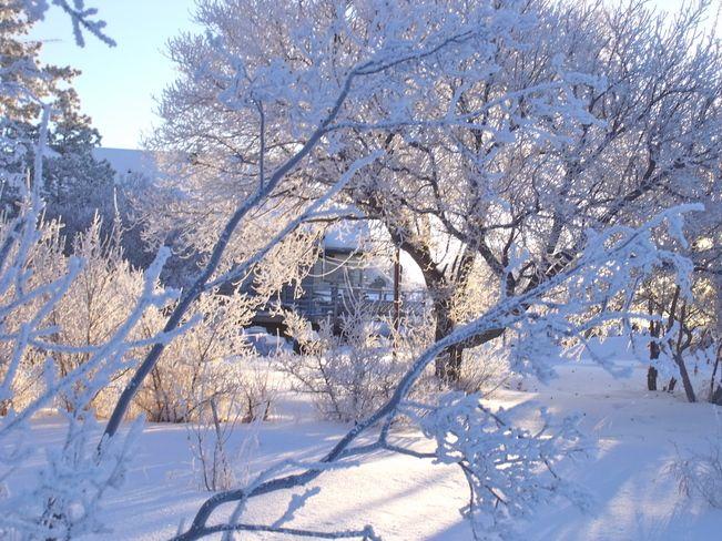 Glistening snow // by Caroline, Trochu, AB