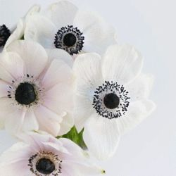 New Styled Stock video collection - Anemones added to the Fempreneur Styled Stock Library.