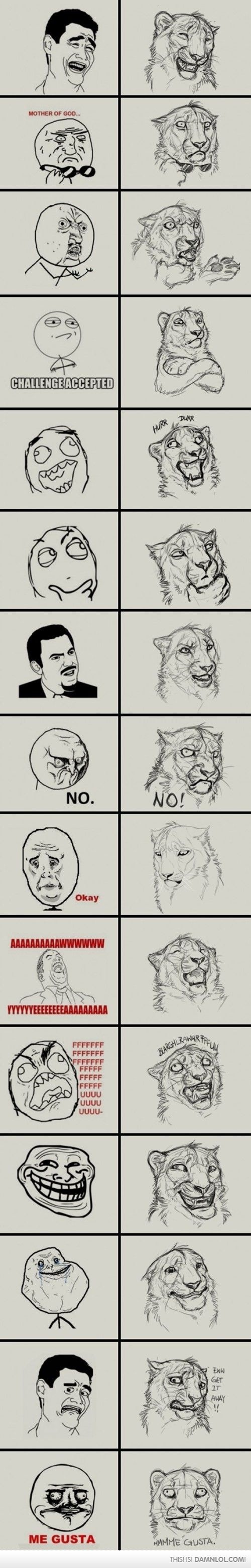 Lion versions of Memes