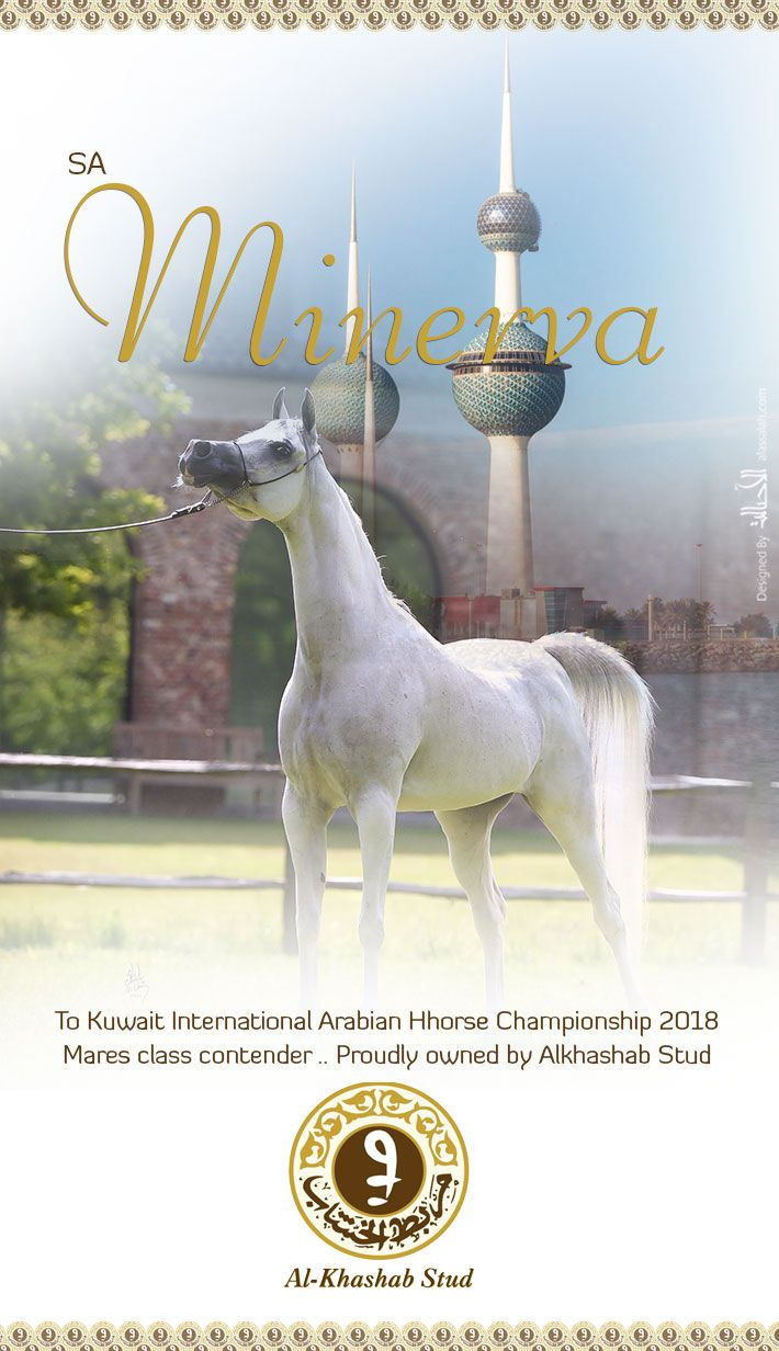 Minerva Competing In Kuwait 2018