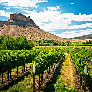 Grand Junction WineTours  - Take a wine tour through the Grand Valley.