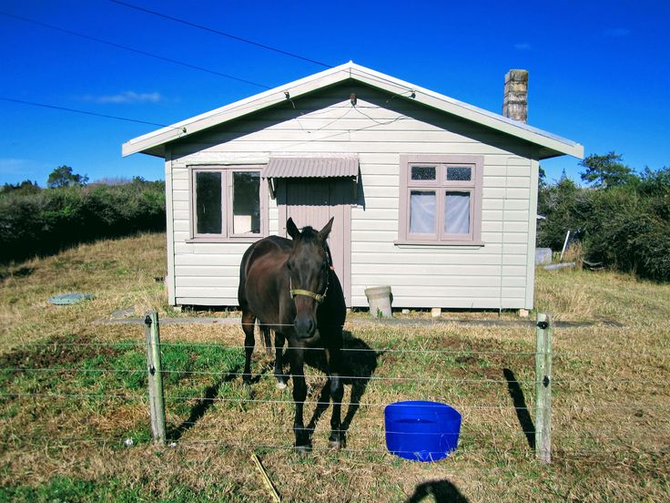 This horse has his own house. I came across this strange sight while out for a drive one day. Just had to stop and take a photo  #stusroadtrips #horse #house #farmhouse #emptyhouse #deserted #photo #photooftheday #photograph #posing #countrylife #rural #countryside #newzealand #waikato#animals #farmanimals #cute #lol #empty
