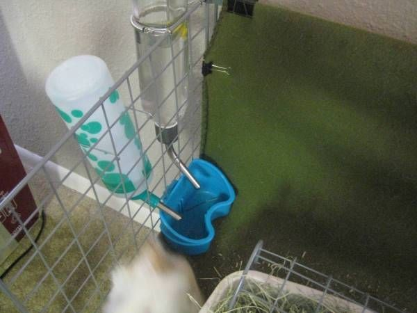 Bird cage feeder to catch any water that may drip from the water bottle. Saves all the carefresh or wood shavings from getting soggy. #guineapigs #cavies