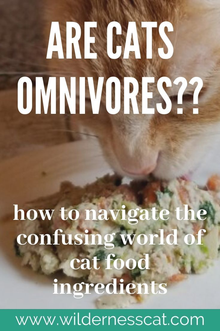 Are Cats Omnivores? Vegan cat food, Best cat food, Cat