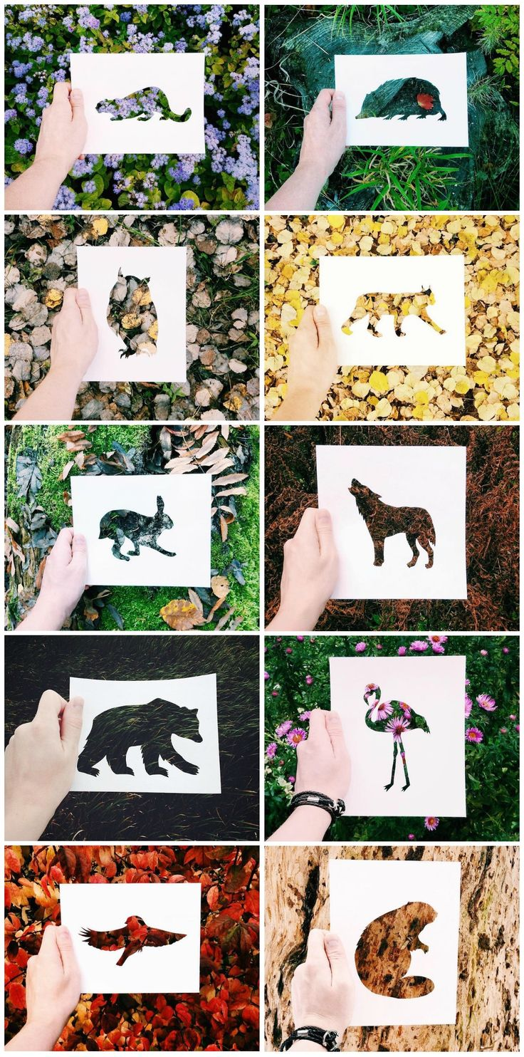 Artist Uses Natural Landscapes to Color in Cutout Silhouettes of Animals