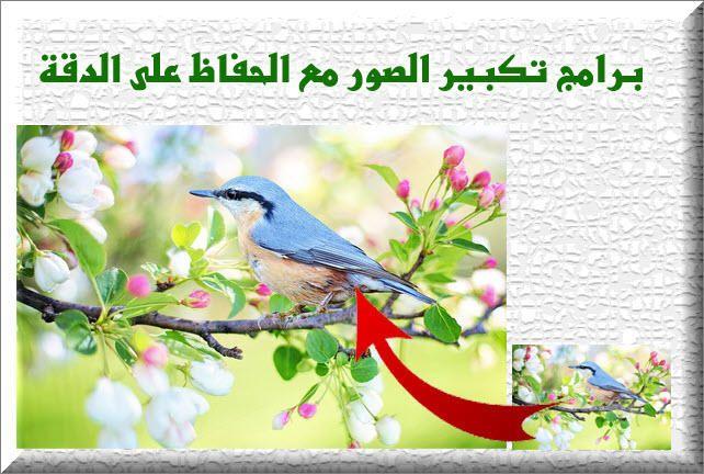 اقوى برنامج تكبير الصور مع الحفاظ على الدقة Blue Jay Animals Bird