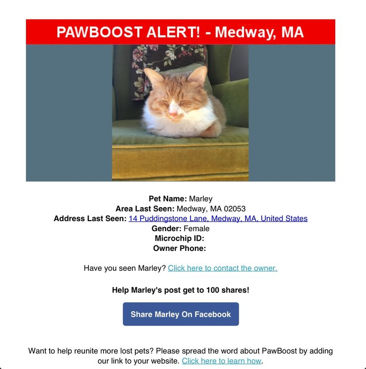 Lost Female Cat Named Marley: Medway, MA