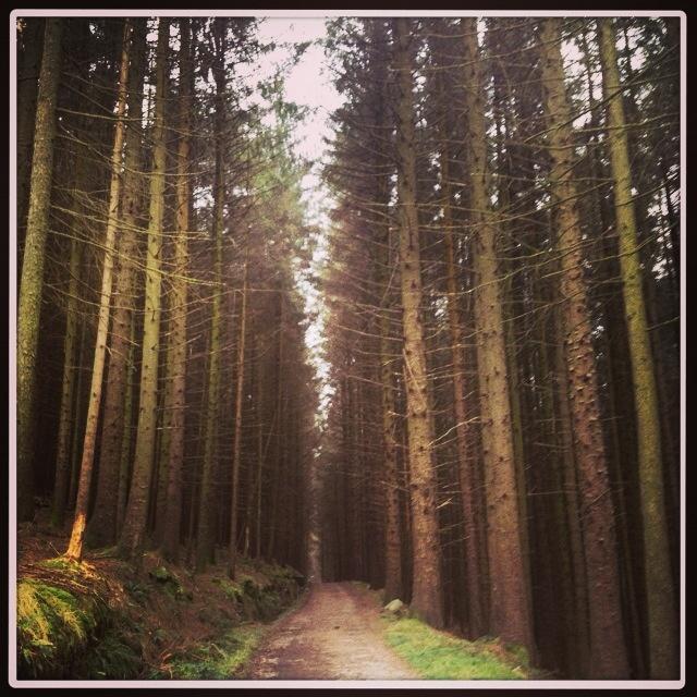 Kilbroney forest