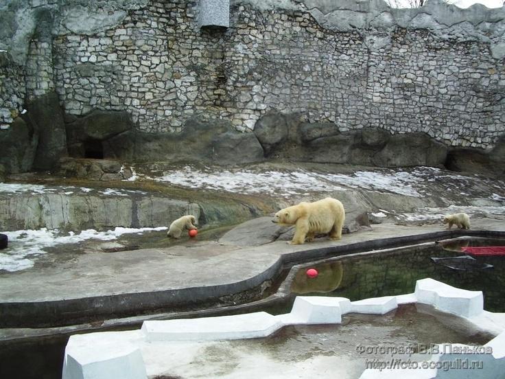 Московский зоопарк-moscow zoo