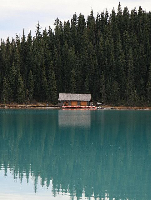 Clear water and tall trees at the lake house.