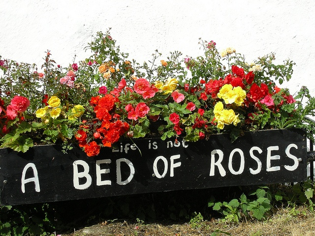 Life is not bed of roses essay
