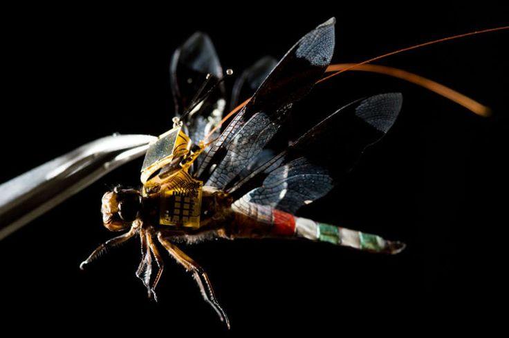Αληθινή λιβελούλη drone κινείται με τη σκέψη... - https://wp.me/p3DBOw-F5y - Επιστήμονες της διεπιστημονικής ερευνητικής εταιρίας Draper χρησιμοποιούν έντομα drone που κινούνται με έλεγχο του μυαλού, χάρη σε μια νέα μικροσκοπική τεχνολογία που ανέπτυξαν.  Το project DragonflEye προσπαθεί ν�