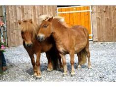Centre Equestre / Poney Club