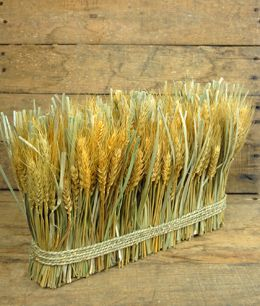 17.99 SALE PRICE! An essential seasonal decoration, this Preserved Wheat bundle,  about 15in long, 9.5in tall, 4in wide. MELSE