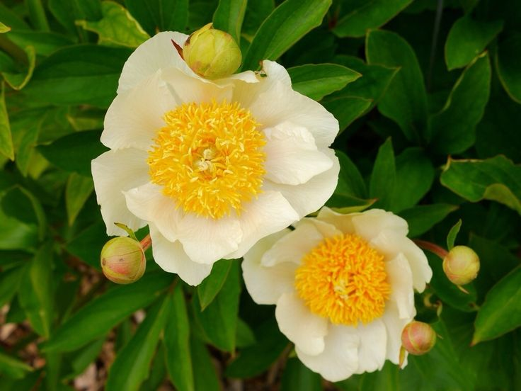 6415 best flowers images on pinterest