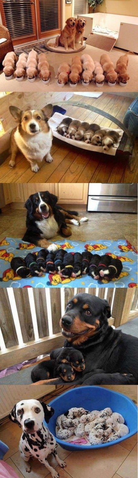 Proud Pooch Parents