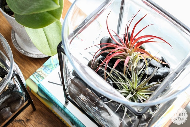 Inspired by Charm: More Air Plants