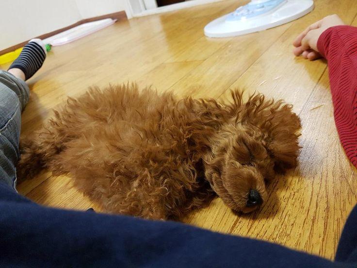 YOONMELLE retweeted:       3 things that softens Min Yoongi: Min Holly Kumamon and Kim Taehyung