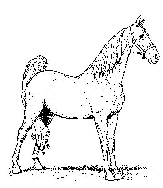 Wild Arabian Horse Coloring Pages