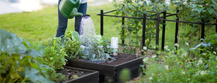 Byhaver spreder sig over hele landet - Urban Garden Company