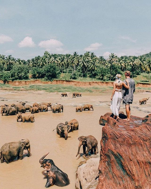 Pinnawala, Sri Lanka • beautiful photo of @gypsea_lust in the Theory pants • available online at @shopbop ☼