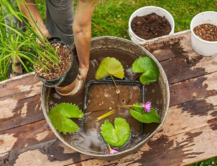 ... Aquatiques sur Pinterest  Herbes dintérieur, Jardin dintérieur et