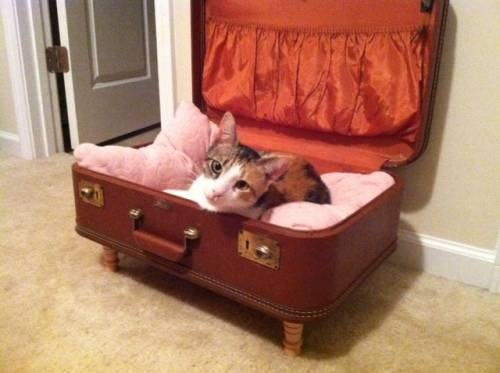 calico kittens for adoption | Charlotte calico Cats & kittens For Sale | eBay Classifieds (Kijiji ...