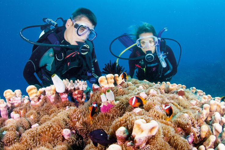10 ways to experience the Great Barrier Reef #qldblog: Camps Camps, Nature Wonder, Great Barrier Reef, Largest Nature, Scubas Diving, Diving Camps, Australia Trips, Greatbarrierreef, Camps Activites