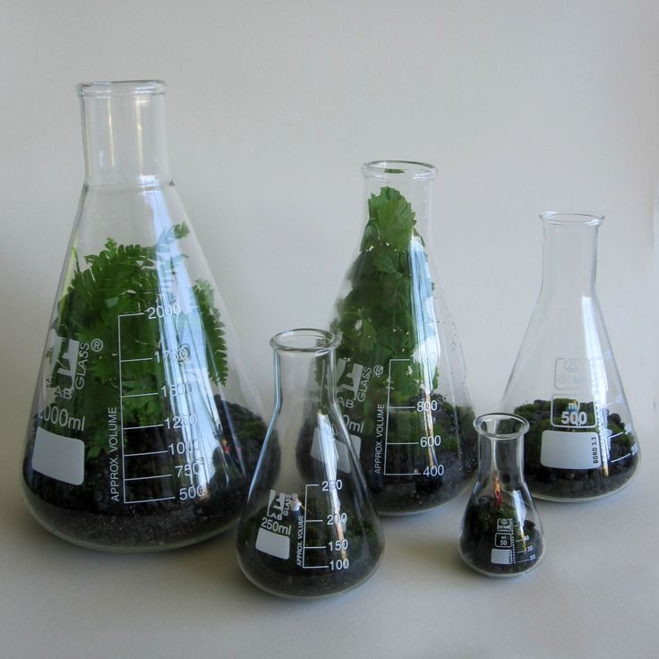A cluster of flask terrariums - there are a few different sizes available