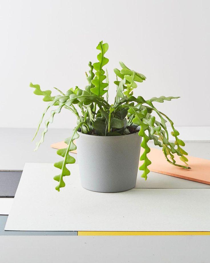 Außergewöhnliche Zimmerpflanzen – 20 Pflanzenarten und hilfreiche Pflegetipps   – Grünpflanzen