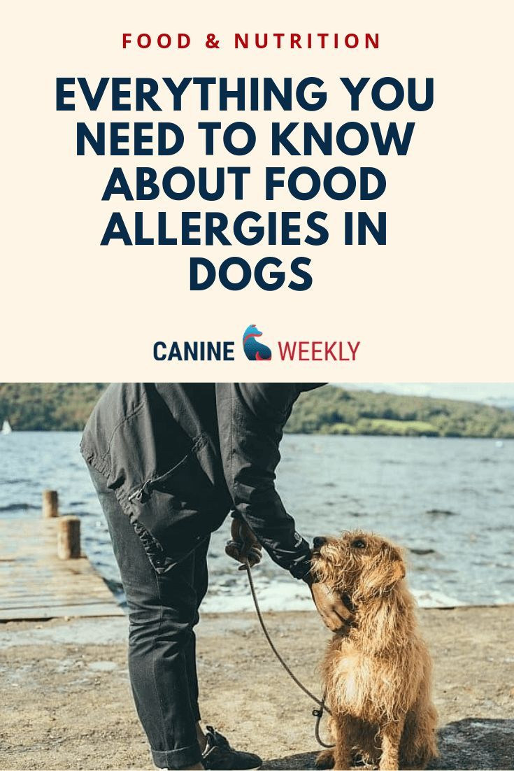Food Allergies In Dogs Understanding Triggers And Symptoms Cat