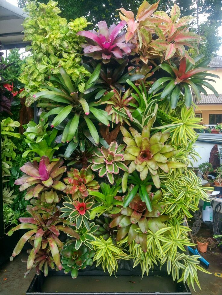 A Living Piece Of Art. Yes please ... I want all those beautiful Bromeliads..